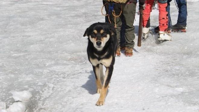 Lẽo đẽo theo sau đoàn leo núi, cô chó hoang lập kì tích khi lên tới đỉnh dãy Himalaya cao hơn 7000 mét - Ảnh 1.