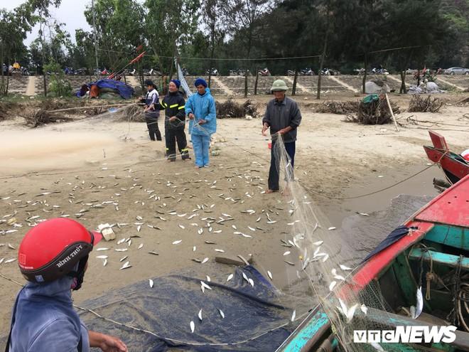 Ảnh: Cá trích mắc dày lưới, ngư dân Hà Tĩnh gỡ mỏi tay - Ảnh 2.