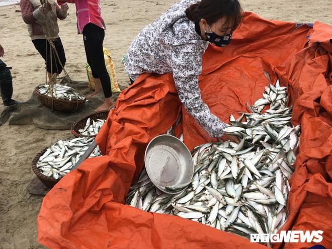 Ảnh: Cá trích mắc dày lưới, ngư dân Hà Tĩnh gỡ mỏi tay - Ảnh 3.