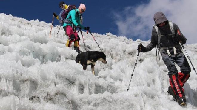 Lẽo đẽo theo sau đoàn leo núi, cô chó hoang lập kì tích khi lên tới đỉnh dãy Himalaya cao hơn 7000 mét - Ảnh 5.