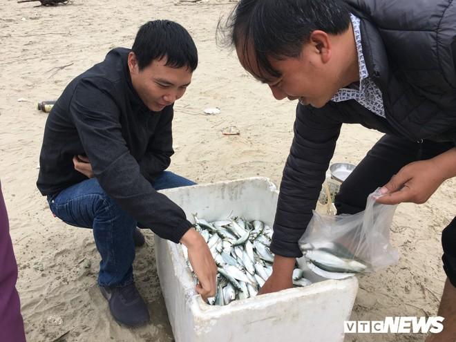 Ảnh: Cá trích mắc dày lưới, ngư dân Hà Tĩnh gỡ mỏi tay - Ảnh 7.