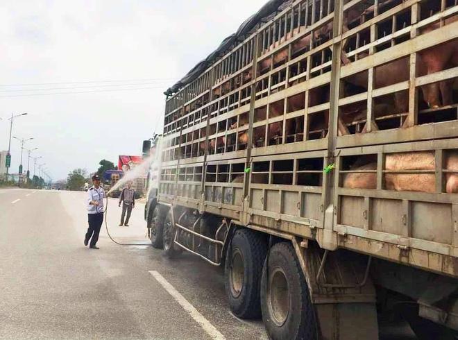 Đàn lợn hàng chục con bất ngờ chết, phát hiện ổ dịch tả lợn châu Phi tại Nghệ An - Ảnh 2.