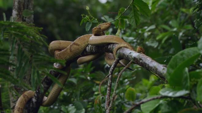 Sự thật về hòn đảo nọc độc nguy hiểm bậc nhất thế giới, bị hơn 400.000 con rắn xâm chiếm - Ảnh 2.