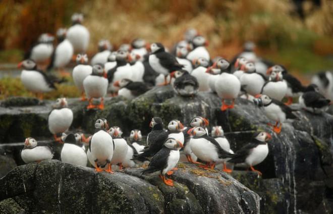 Hòn đảo này có một loài chim siêu dễ thương, vừa trở về từ cõi chết khiến giới khoa học vui mừng khôn xiết - Ảnh 2.