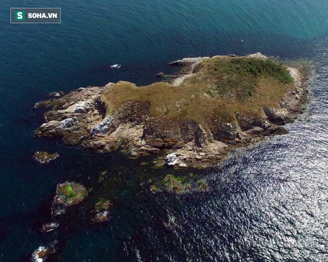 Sự thật về hòn đảo nọc độc nguy hiểm bậc nhất thế giới, bị hơn 400.000 con rắn xâm chiếm - Ảnh 4.