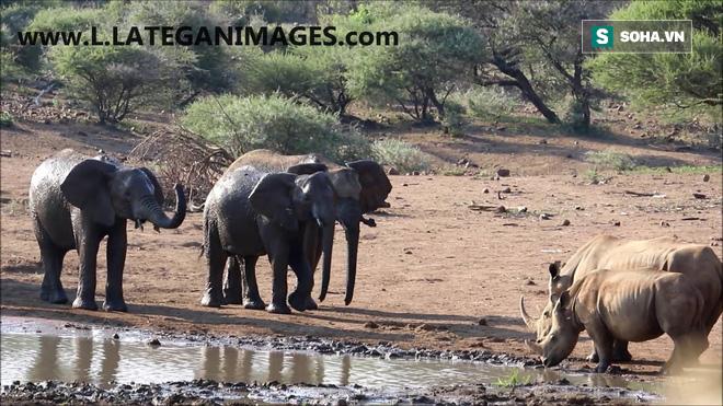 Không muốn chia sẻ nguồn nước, voi đứng từ xa... ném đá đánh đuổi mẹ con tê giác - Ảnh 1.