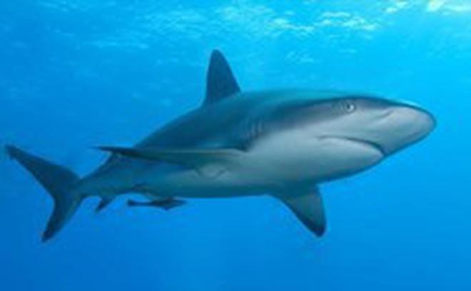 Thế giới động vật: Cá mập săn mồi nhanh như chớp, bụi bay mịt mù