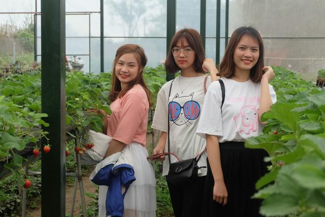Trang trại dâu tây Hà Nội gây sốt, khách ùn ùn đến hái sạch quả chín - Ảnh 9.
