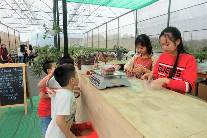 Trang trại dâu tây Hà Nội gây sốt, khách ùn ùn đến hái sạch quả chín - Ảnh 10.