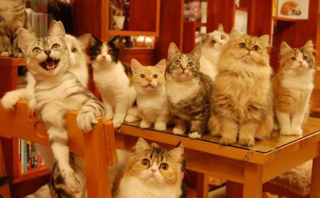 Không đâu như Nhật Bản, quán cà phê mà như sở thú, con gì cũng có!