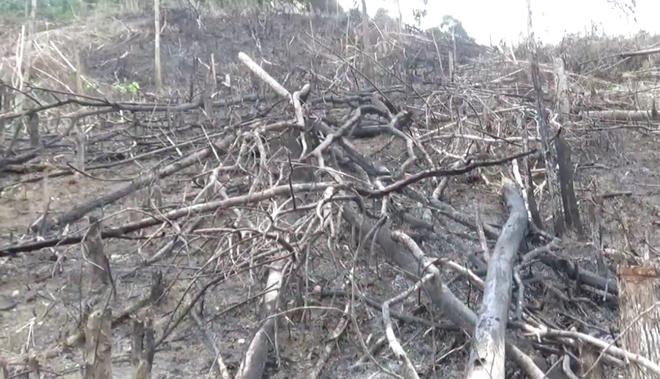 Xác minh thông tin Phó Chủ tịch xã tham gia chặt phá và đốt rừng - Ảnh 2.