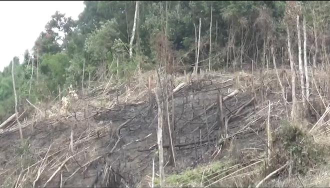 Xác minh thông tin Phó Chủ tịch xã tham gia chặt phá và đốt rừng - Ảnh 3.