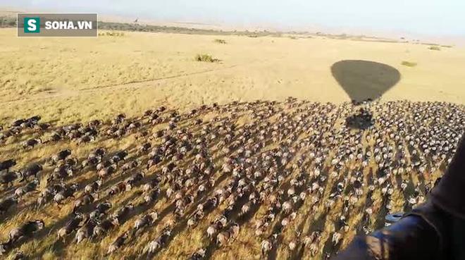 Chỉ 1 hành động nhỏ, người này đã khiến hàng ngàn con linh dương cuống cuồng bỏ chạy - Ảnh 2.