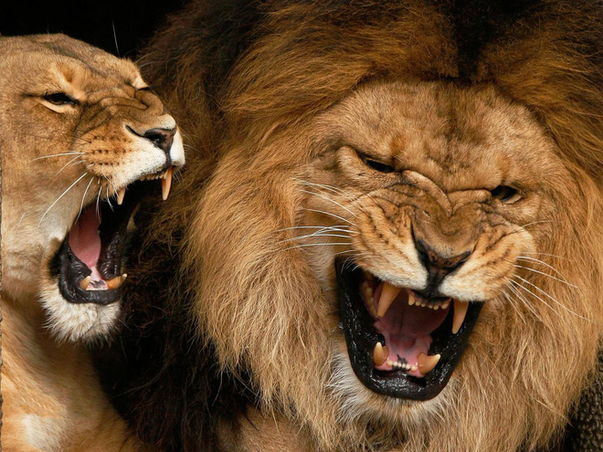 Vua hủy diệt: Cận cảnh loài động vật có cú cắn mạnh nhất hành tinh - Ảnh 5.
