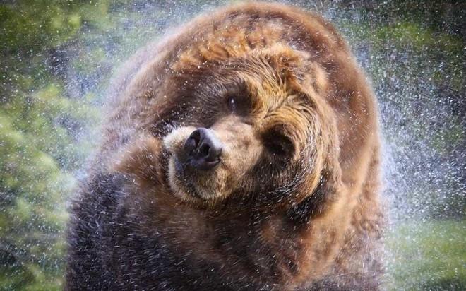 Vua hủy diệt: Cận cảnh loài động vật có cú cắn mạnh nhất hành tinh - Ảnh 15.