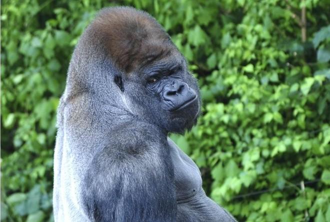Vua hủy diệt: Cận cảnh loài động vật có cú cắn mạnh nhất hành tinh - Ảnh 18.