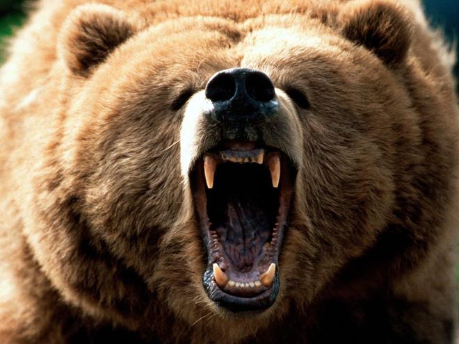 Vua hủy diệt: Cận cảnh loài động vật có cú cắn mạnh nhất hành tinh - Ảnh 7.