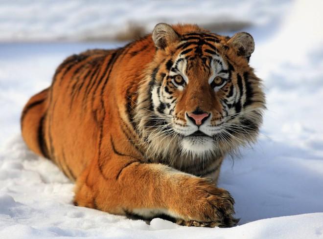Vua hủy diệt: Cận cảnh loài động vật có cú cắn mạnh nhất hành tinh - Ảnh 10.
