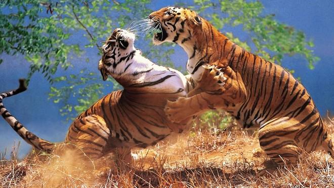 Vua hủy diệt: Cận cảnh loài động vật có cú cắn mạnh nhất hành tinh - Ảnh 12.