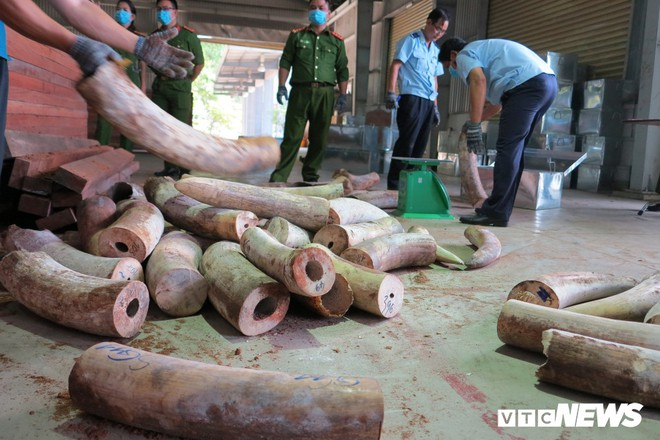 Bắt giữ hơn 9,1 tấn sừng nghi ngà voi ngụy trang tinh vi ở Đà Nẵng - Ảnh 1.