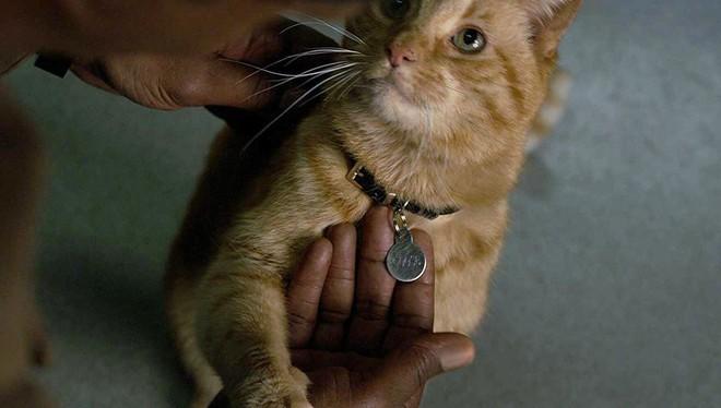 Không phải Captain Marvel, chú mèo dễ thương mới là chìa khóa đánh bại Thanos? - Ảnh 4.