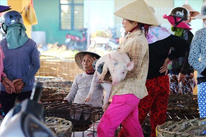 Chợ heo lớn nhất miền Trung ứng phó dịch tả lợn châu Phi như thế nào? - Ảnh 1.