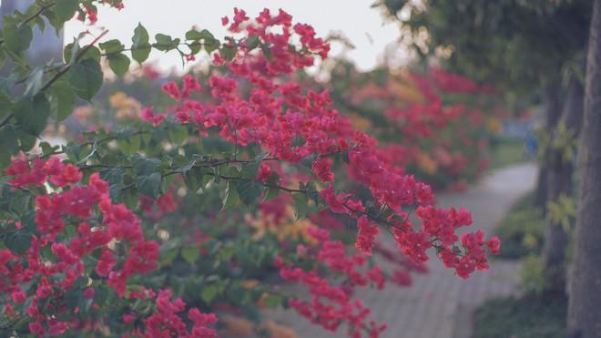 Chụp cả trăm kiểu đều đẹp, đây là giàn hoa được dân sống ảo truy lùng tại một trường đại học ở Việt Nam - Ảnh 10.