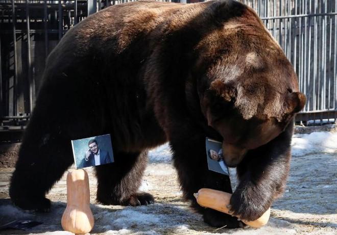 Gấu Nga dự đoán kết quả bầu cử tổng thống Ukraine  - Ảnh 2.