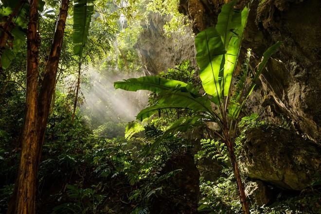 Khám phá vẻ đẹp kỳ ảo bên trong hang Sơn Đoòng - Ảnh 7.