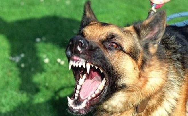 Bé trai 11 tuổi tử vong vì chó dại cắn tại Sơn La