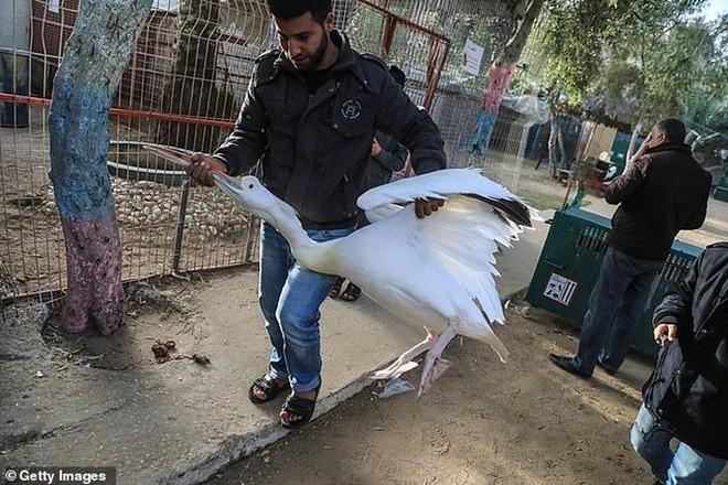 Ám ảnh vườn thú địa ngục, nơi động vật khổ sở chết mòn ở Gaza - Ảnh 3.