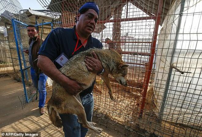 Ám ảnh vườn thú địa ngục, nơi động vật khổ sở chết mòn ở Gaza - Ảnh 5.