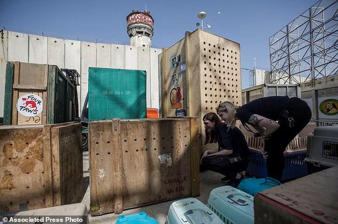 Ám ảnh vườn thú địa ngục, nơi động vật khổ sở chết mòn ở Gaza - Ảnh 6.