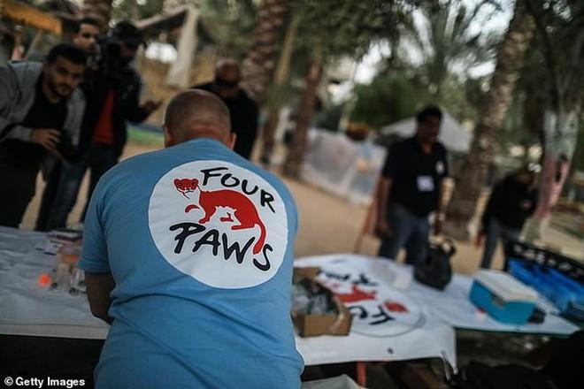 Ám ảnh vườn thú địa ngục, nơi động vật khổ sở chết mòn ở Gaza - Ảnh 7.