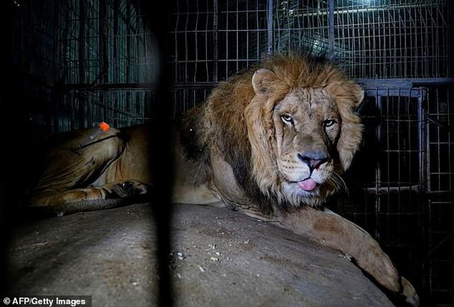 Ám ảnh vườn thú địa ngục, nơi động vật khổ sở chết mòn ở Gaza - Ảnh 8.
