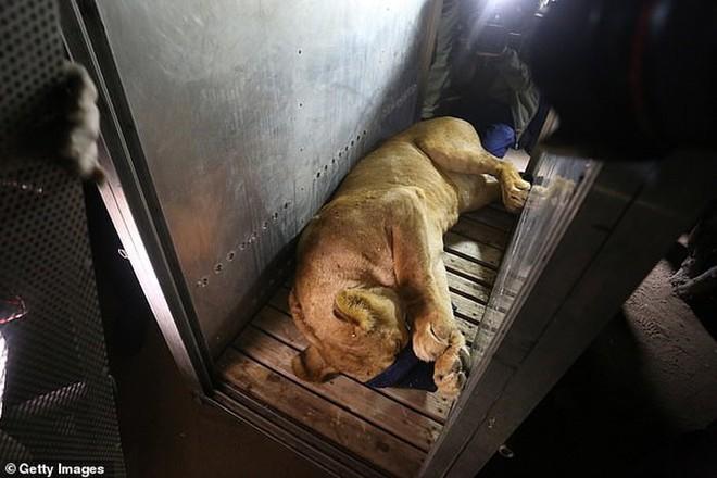 Ám ảnh vườn thú địa ngục, nơi động vật khổ sở chết mòn ở Gaza - Ảnh 9.