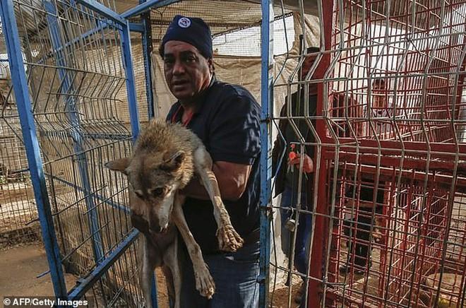 Ám ảnh vườn thú địa ngục, nơi động vật khổ sở chết mòn ở Gaza - Ảnh 10.