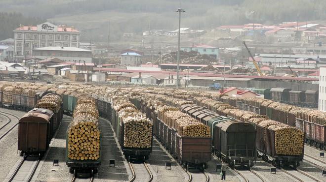 Khát tài nguyên, Trung Quốc ngấu nghiến tài sản quý báu của Nga: Người dân phẫn nộ! - Ảnh 1.