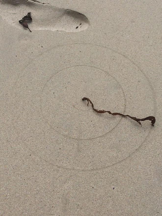 Chùm ảnh: Những tác phẩm nghệ thuật siêu thực nhất của tạo hóa mà con người từng tìm thấy được trên bãi biển - Ảnh 1.
