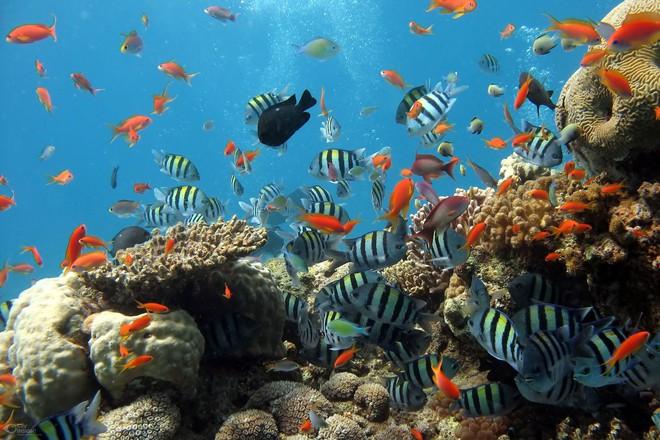 Rùa biển thở bằng phổi, vậy chúng làm thế nào để ăn được dưới nước? Đáp án là sự kỳ diệu của tạo hóa - Ảnh 4.