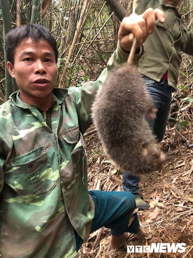 Kỳ thú chuyện săn lùng loài chuột khổng lồ trong rừng tây Yên Tử - Ảnh 3.