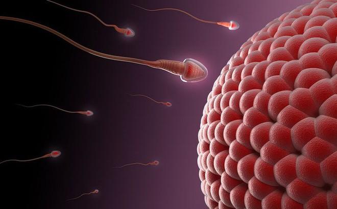 6 nguyên nhân cản trở việc thụ thai thành công: Các cặp đôi muốn có con nên chú ý sớm