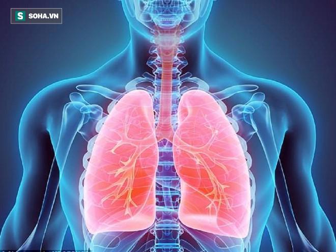 Giải mã bí ẩn cơ thể người: Lá phổi cũng chỉ như cái xô chứa đầy máu - Ảnh 2.