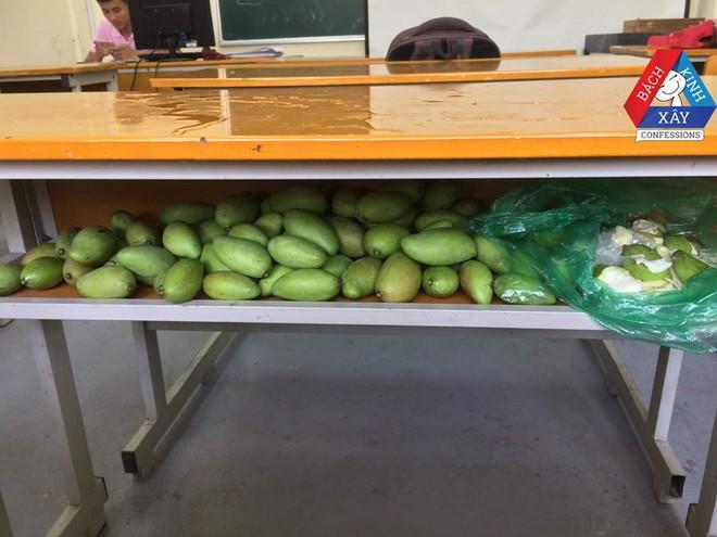 Đỉnh cao xoài tặc là đây: Sinh viên Bách Khoa chứa nguyên cả một hộc bàn đầy xoài! - Ảnh 2.