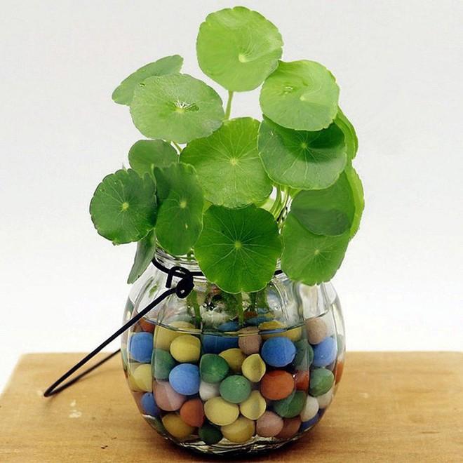 Những loại cây cảnh hút tài lộc nên trồng trong nhà để tiền vào như nước - Ảnh 6.