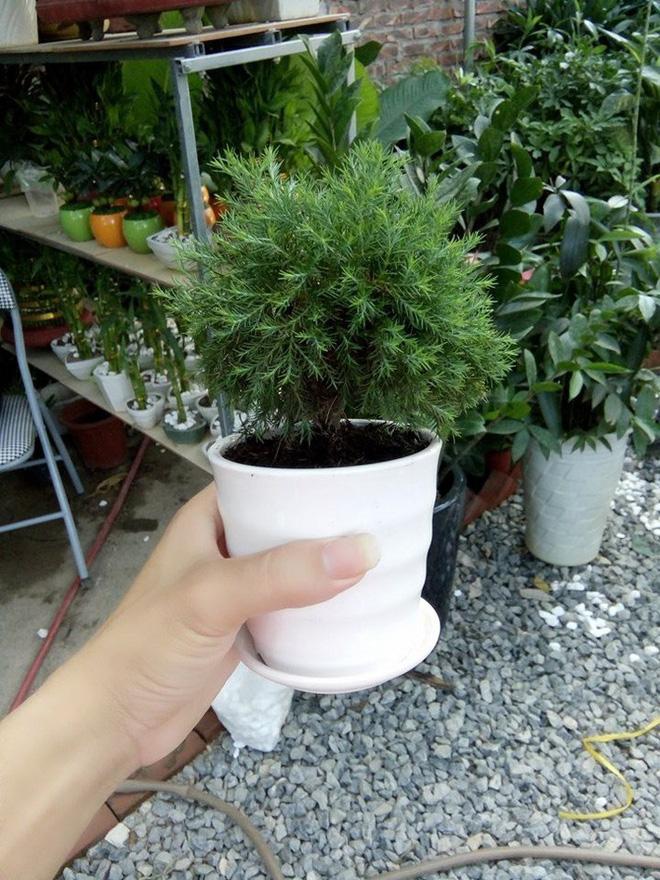 Những loại cây cảnh hút tài lộc nên trồng trong nhà để tiền vào như nước - Ảnh 9.