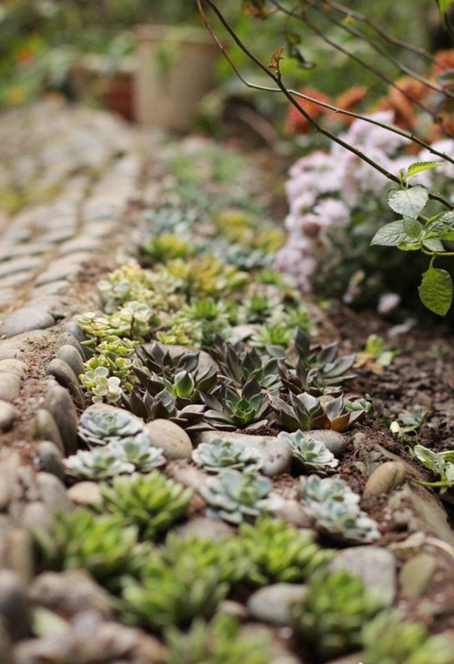 Khu vườn rực rỡ như xứ sở thần tiên của cô gái xinh đẹp với đủ loại hoa khoe sắc - Ảnh 18.
