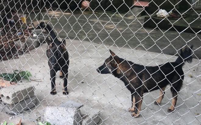 GĐ TT huấn luyện chó nghiệp vụ: Khi bị chó tấn công nên đứng yên như cây, nằm như khúc gỗ