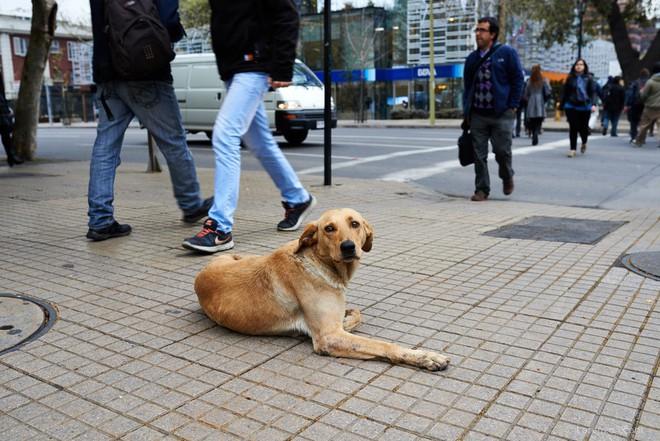 Quy định quản lý chó nuôi khắt khe trên thế giới - Ảnh 1.