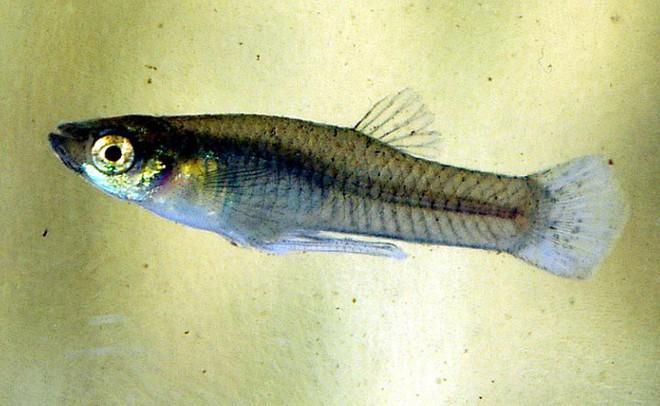 Nhiều loài cá bị tăng động, thay đổi hành vi giao phối vì hóa chất thải xuống biển của con người - Ảnh 1.